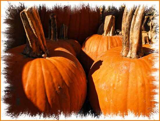 Fall Autumn Harvest - Large Pumpkins in a Row, Thankgiving Season by Chantal PhotoPix