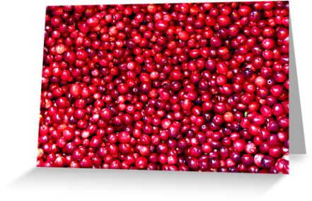 Cranberry Harvest - Fall Autumn Season - Plentiful Red Berries by Chantal PhotoPix