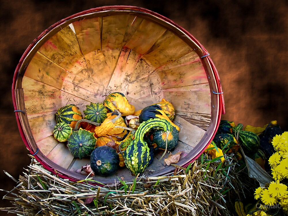 Pumpkins, Gourds & Squash - Wooden Bushel on Hay Bale - Fall Autumn Harvest by Chantal PhotoPix