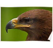 Steppe Eagle v2 Poster
