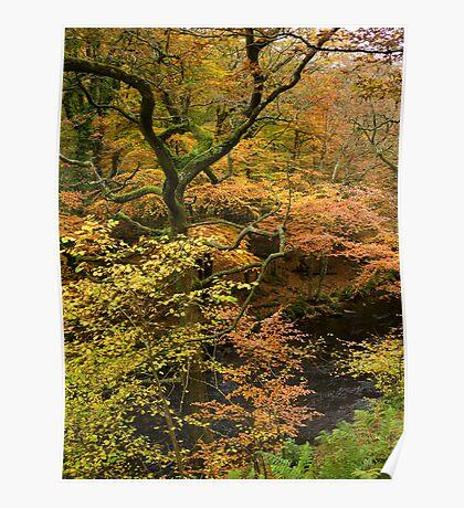 Autumn Colour by the River Teign, Dartmoor, England Poster