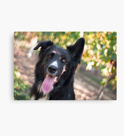 The star of the show Canvas Print