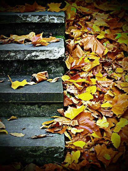 Steps and Leaves by jrsisson