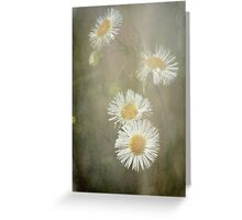 Frosted Fleabane Greeting Card