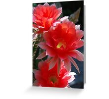Late Season Echinopsis Greeting Card
