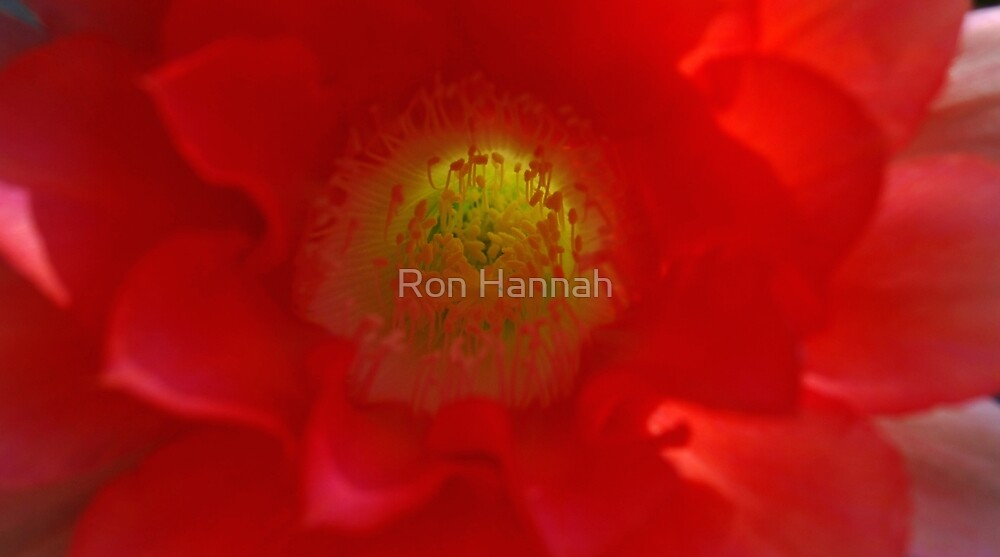 The Light Within by Ron Hannah