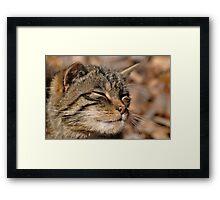 The Highland Tiger (Scottish Wildcat) Framed Print