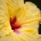 Hawaiian Hibiscus by Josh220