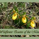 Wildflower Quotes of the Month by Vickie Emms