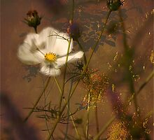 Cosmea47  by Mike  Waldron