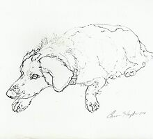 Dog Sketch I by Cameron Hampton
