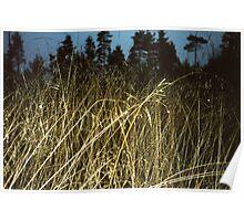 Tall Grass - Markaryd, Sweden Poster
