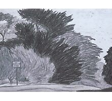 Trees on a Windy Day Photographic Print