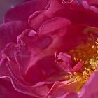 Flora Close Ups by Wealie