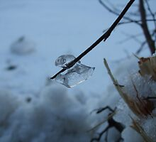 Ice on a Branch by rhulth