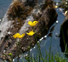 Buttercups by the glistening river by Wealie