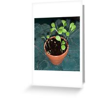 The Small Lettuce Plants Greeting Card