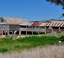 A Grand Old Shed by Terry Everson