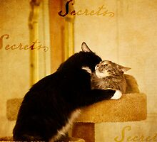 Cat Secrets by Lynn Starner