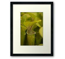 Deadly Green Framed Print
