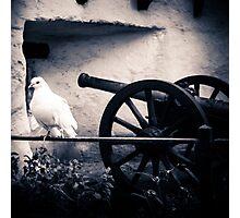 Peace Dove Vers. 2 Photographic Print