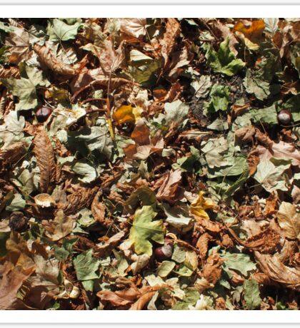 Top view of the green and brown fallen leaves of maple and chestnut Sticker