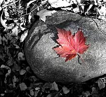 ColorSplash Leaf by alyssaniezen