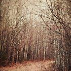 il sentiero by Priska Wettstein