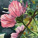 Pink Cosmos by Amy-Elyse Neer