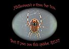 Halloween Card - Marbled Orb Weaver Spider by MotherNature