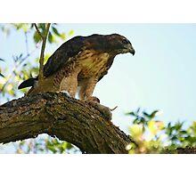 Hawk and Prey Photographic Print