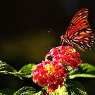 Sunlit Buttterfly by Barbara  Brown
