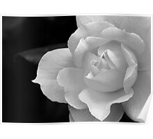 The Exquisiteness Of A Rose  Poster
