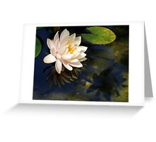 Reflections Of A Water Lily Greeting Card