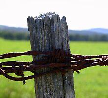 Rusty wire by Nigel Butfield