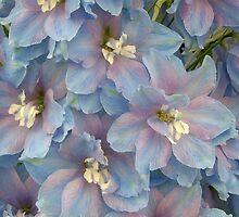 Delphinium Blooms by Wealie