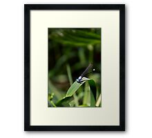 Damselfly on Green Blade Framed Print