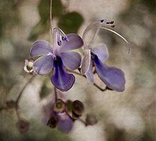 Butterfly dreams by Celeste Mookherjee