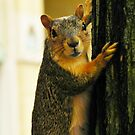 Squirrel Pose by Atheum