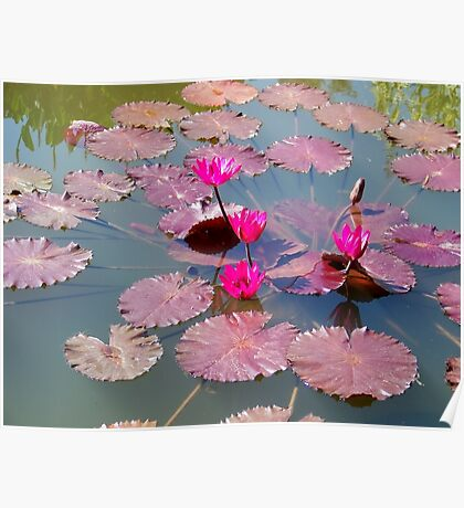 Hot Pink Lily Pads Poster