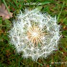 Life Goes On by Deb  Badt-Covell