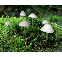 Tiny little fungi Photographic Print