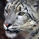 SNOW LEOPARD PORTRAIT by Charlene Aycock IPA