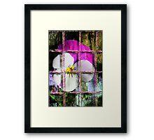 Pansy Framed Print