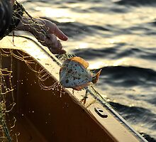 Bringing in the nets by Heather Thorsen