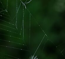 Caught in the Web ! by jean-jean