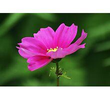 Pink Flower Photographic Print