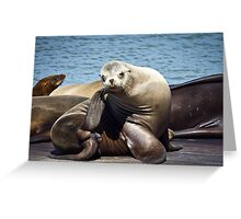 Sealion Scratching Greeting Card