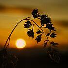 Harvest Sun by David Alexander Elder