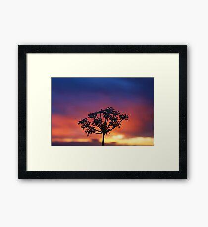 Wildflower Night Framed Print